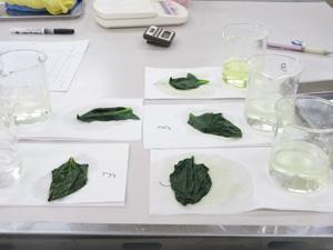 調理実験野菜①4